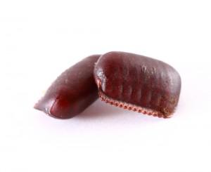 cucarachas ootecas
